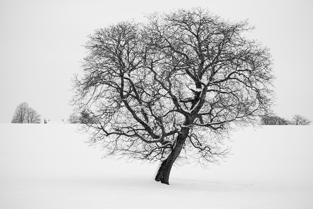 Tree70200