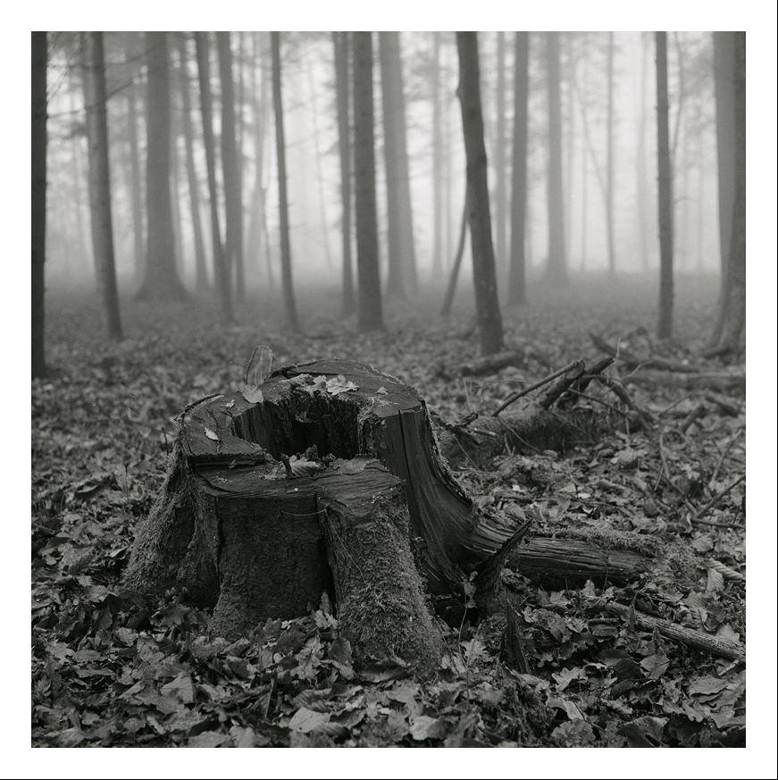 Forêt Au Yashica mat 124