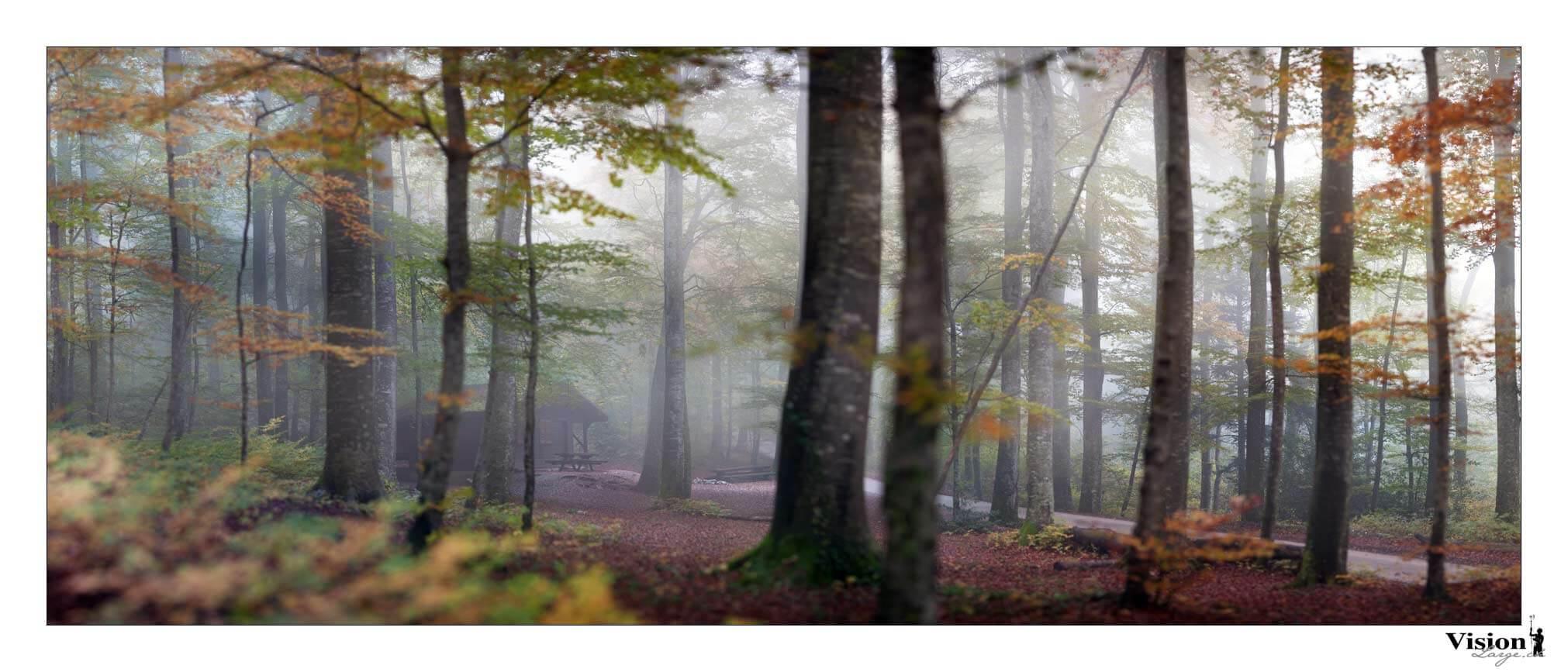 Autonme dans le Jura, couleurs automnales