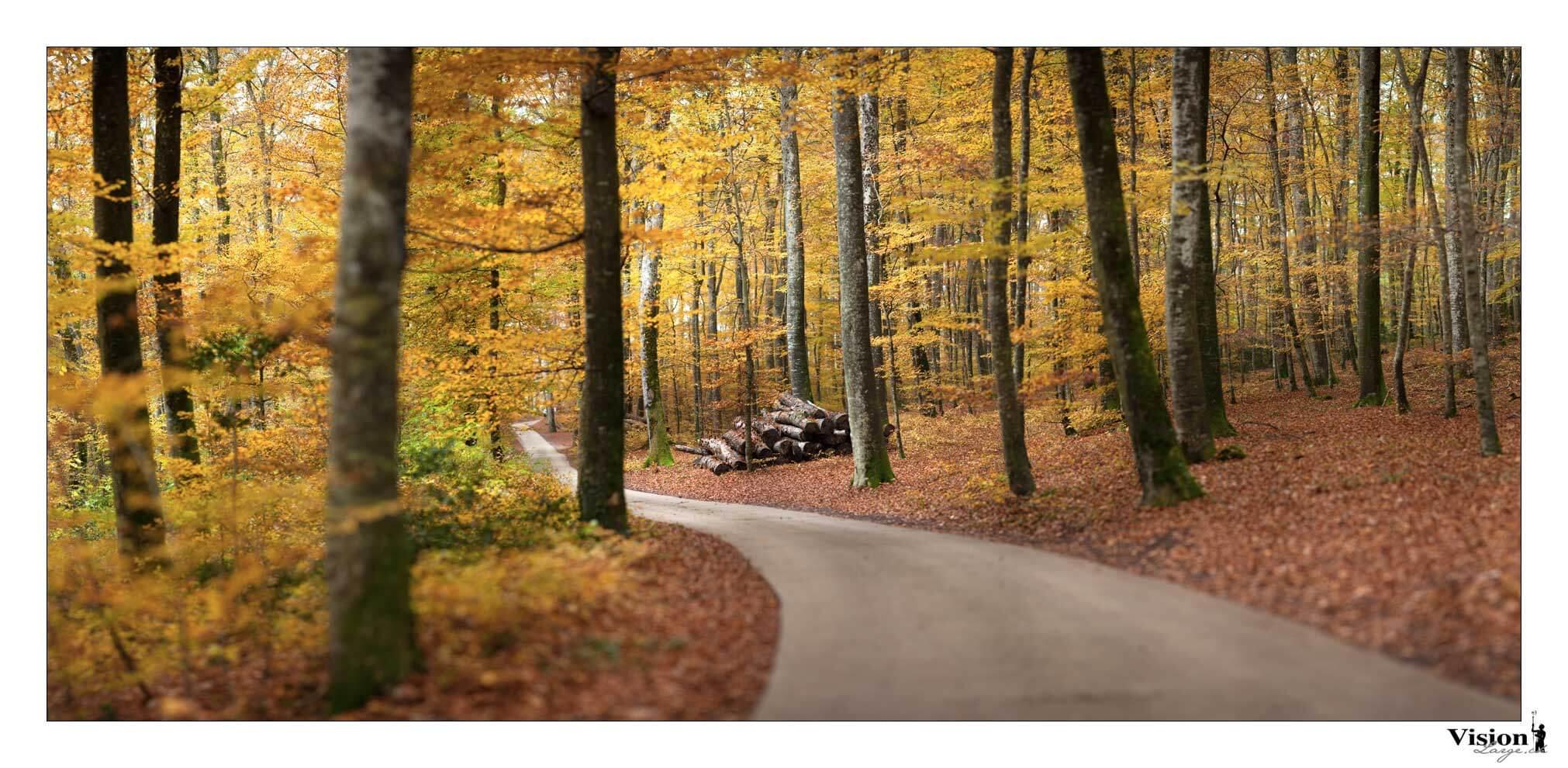 Chemin d'automne, couleurs automnales