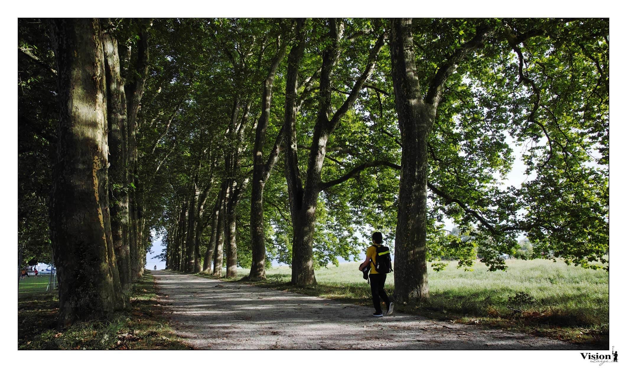 Sigma Dp0 quattro, l'allée des beaux arbres de St-Sulpice