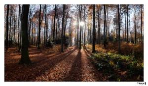 Rayon de soleil dans la forêt du Sepey