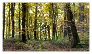 Forêt aux alentours de Oulens