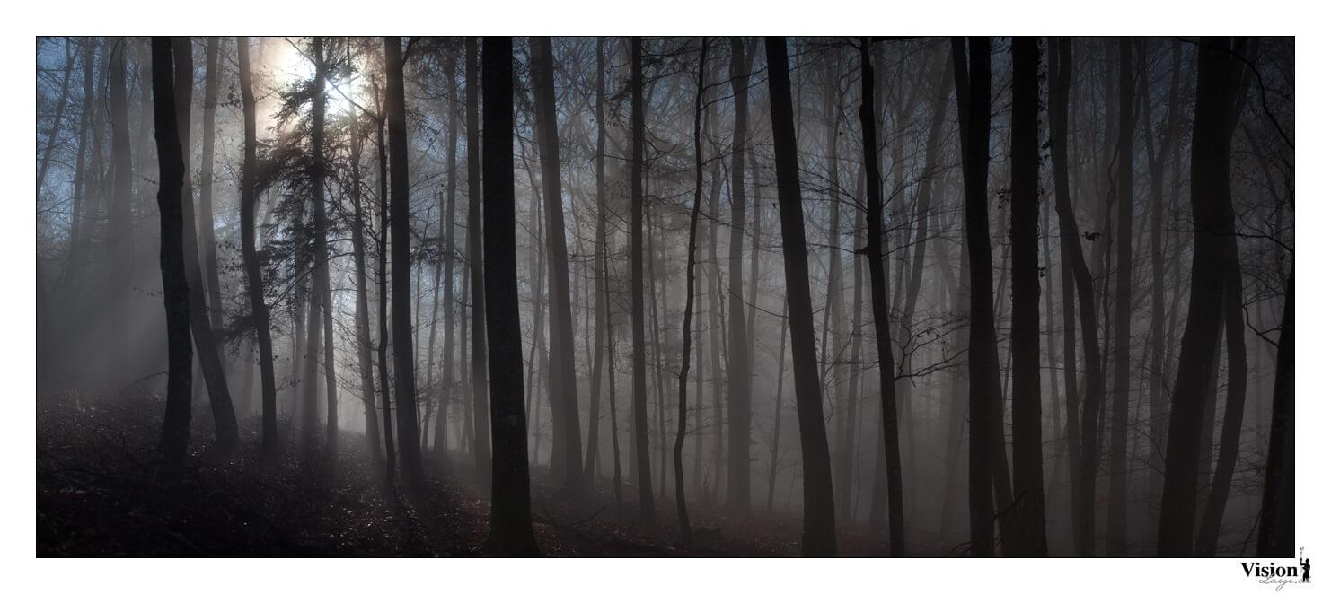 Photo panoramique de la forêt de Chamblon