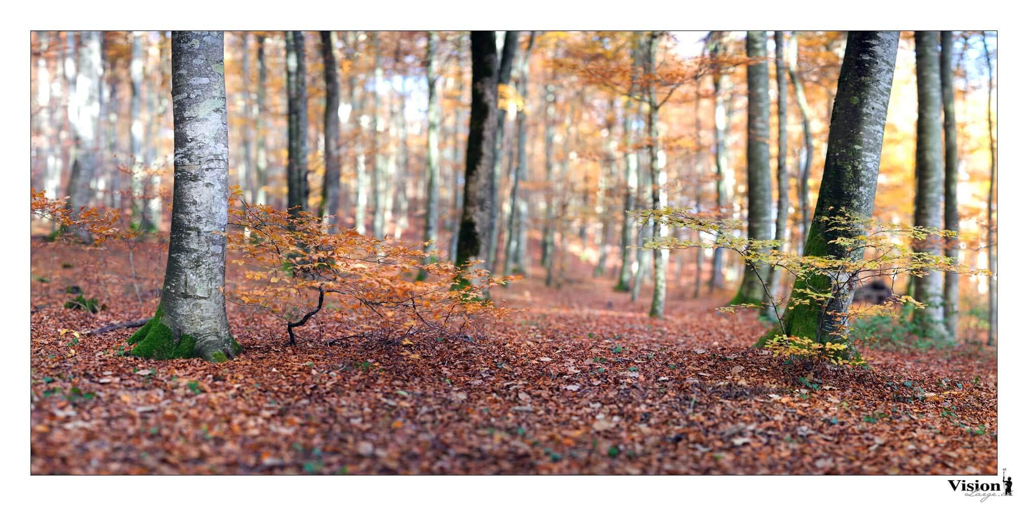 automne, couleurs automnales