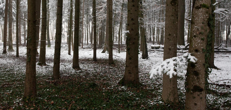 Neige tardive près de Belmont