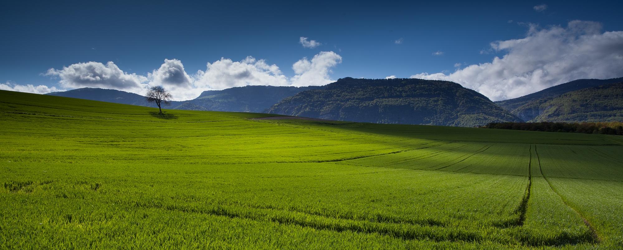 photo champs de blé et lumière