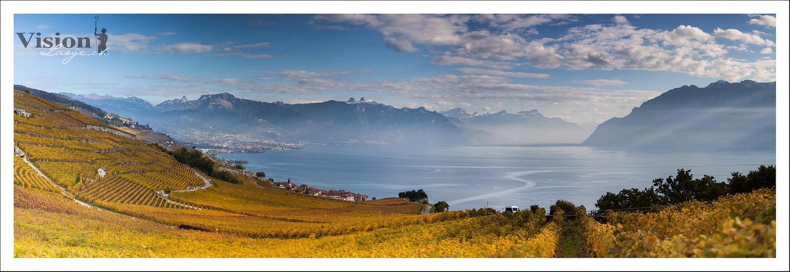 Vignes suisse