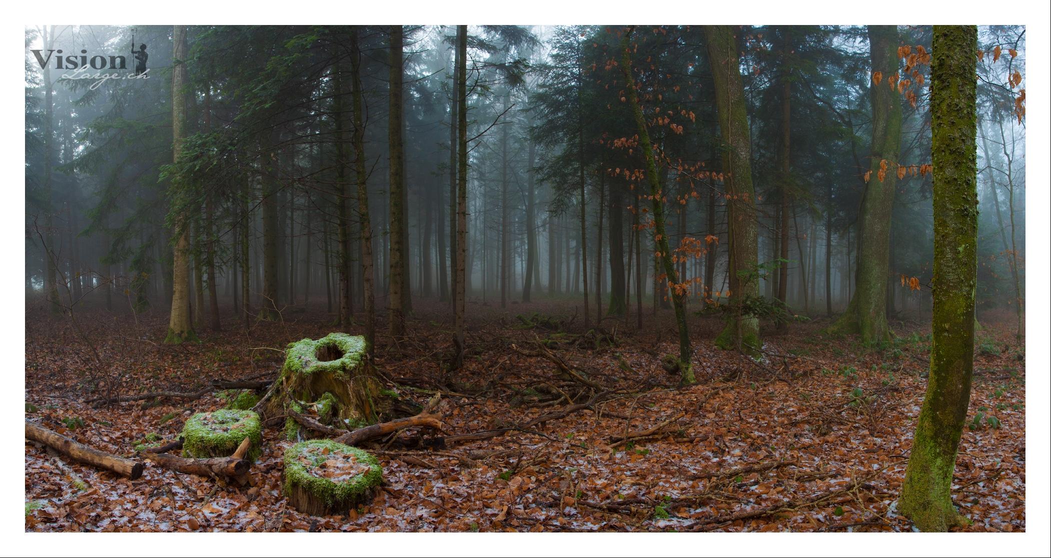 Brume en forêt près de Belmont
