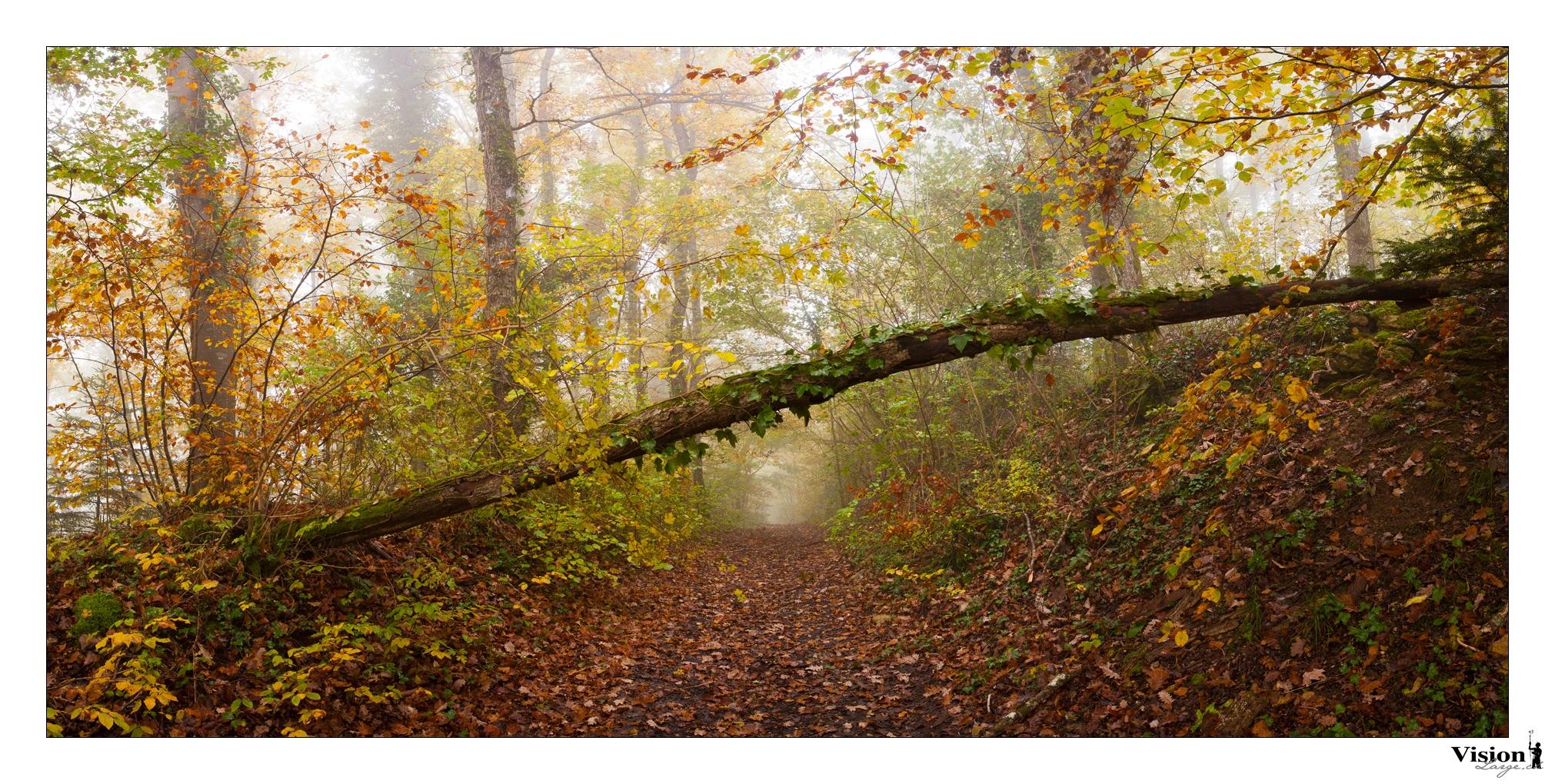 virée dans les bois de Chamblon près d'Yverdon