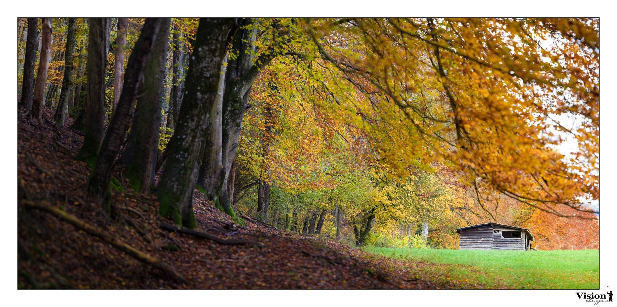 forêt chamblon panorama