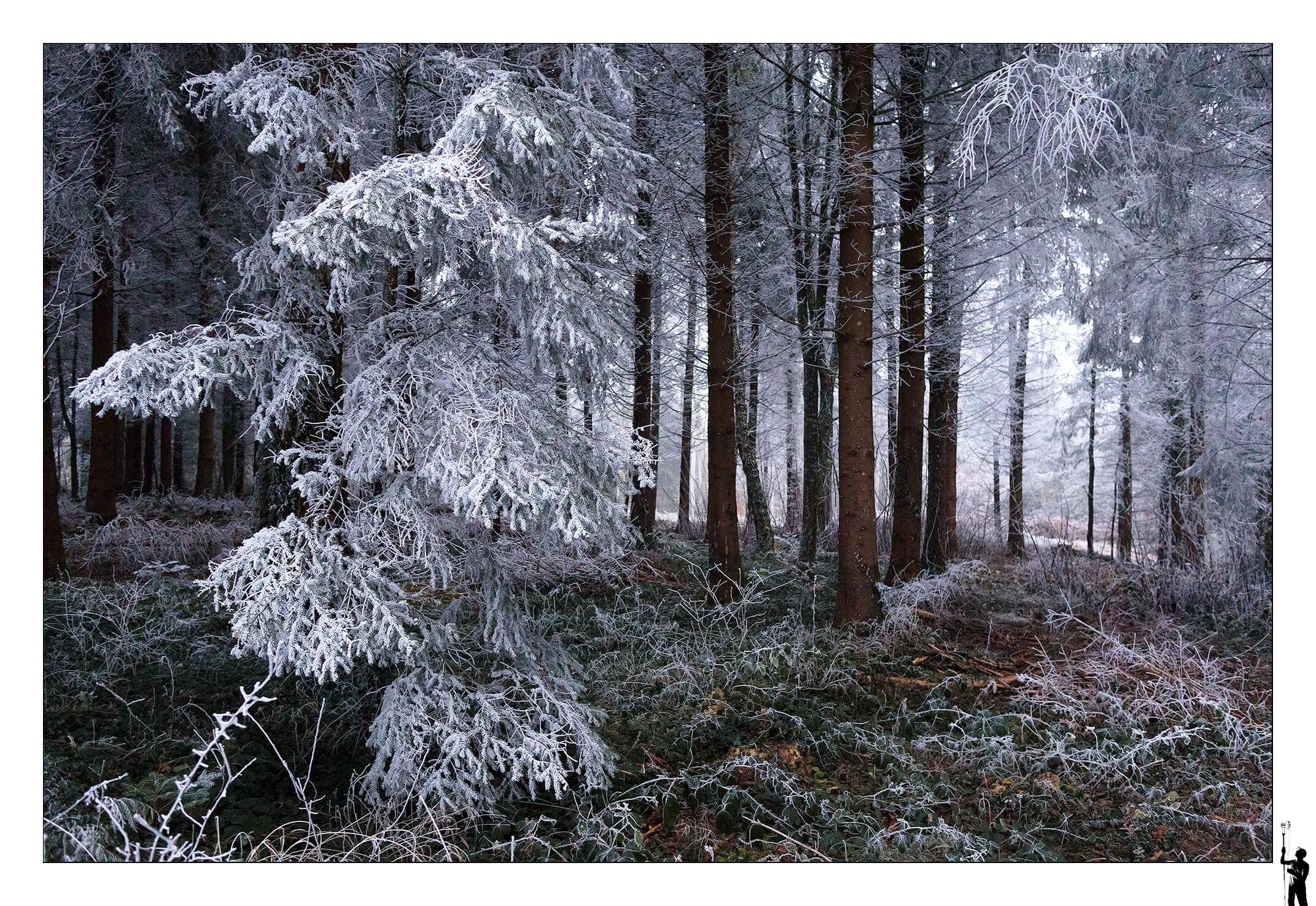 Dans la forêt de Penthéréaz recouverte de givre