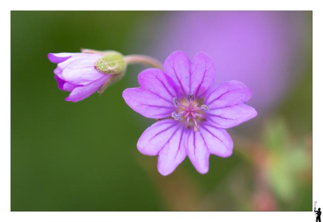 Canon EOS M50 et Canon 100 f2.8 IS Macro Fleurs
