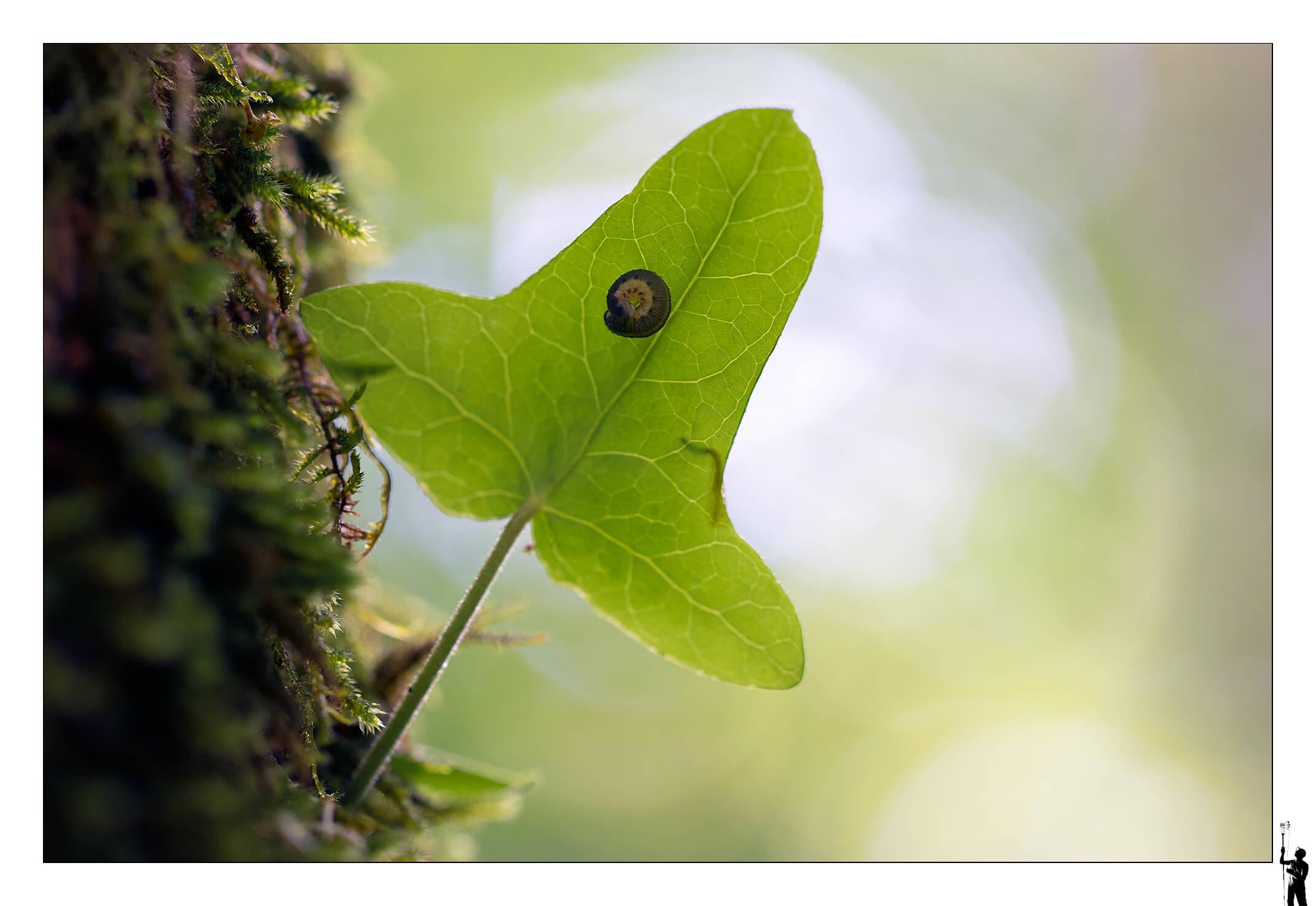 Canon EOS M50 et Canon 100 f2.8 IS Macro Insecte