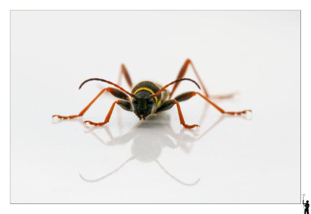 Insecte, toît voiture. Canon M50